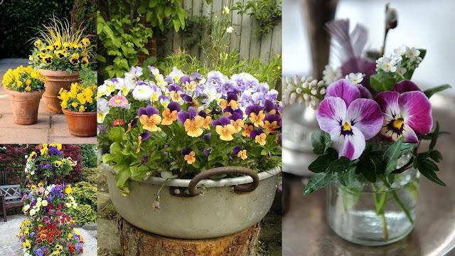 Το Λουλούδι του Μήνα: ΝΟΕΜΒΡΙΟΣ