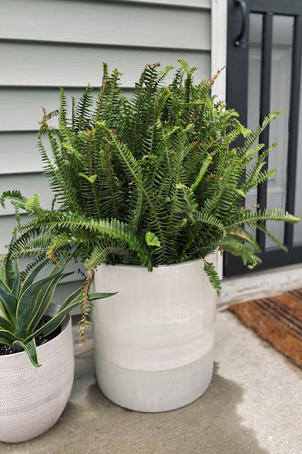 fern in colorblock large planter