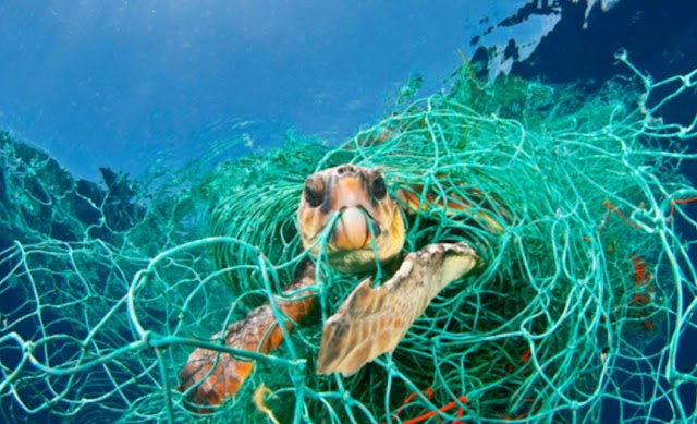 Plastic and Fish Snare Traps becoming deadly for Marine life: Reports