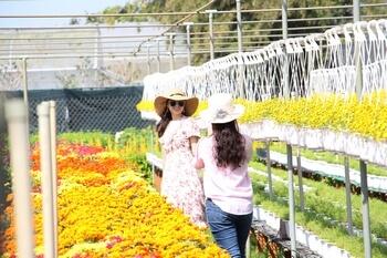 Khách du lịch chụp hình tại Làng hoa Sa Đéc