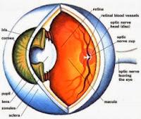 obat herbal stroke mata