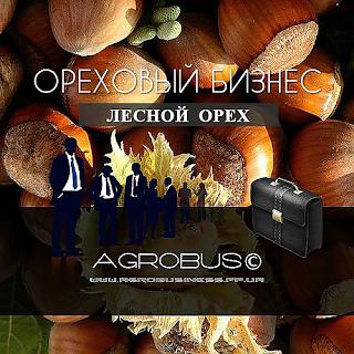 Фундук. Ореховый бизнес в Украине