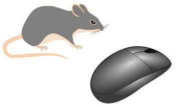 Analogía Ratón