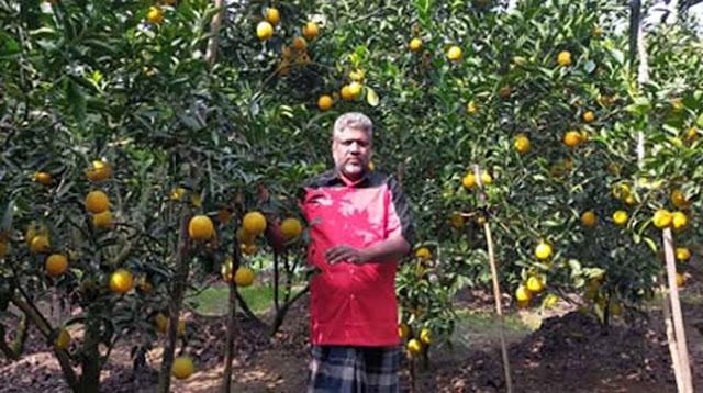 Success in Darjeeling variety orange, malta cultivation