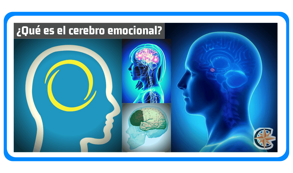 ¿Qué es el Cerebro Emocional?