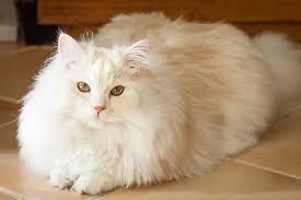 Obat Penumbuh Bulu Kucing Yang Bagus Untuk Hasil Yang Maksimal