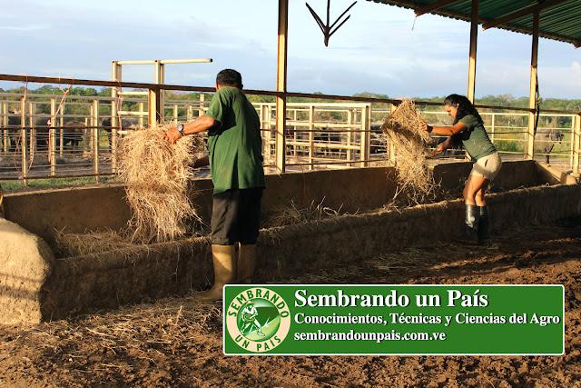 comederos para búfalos