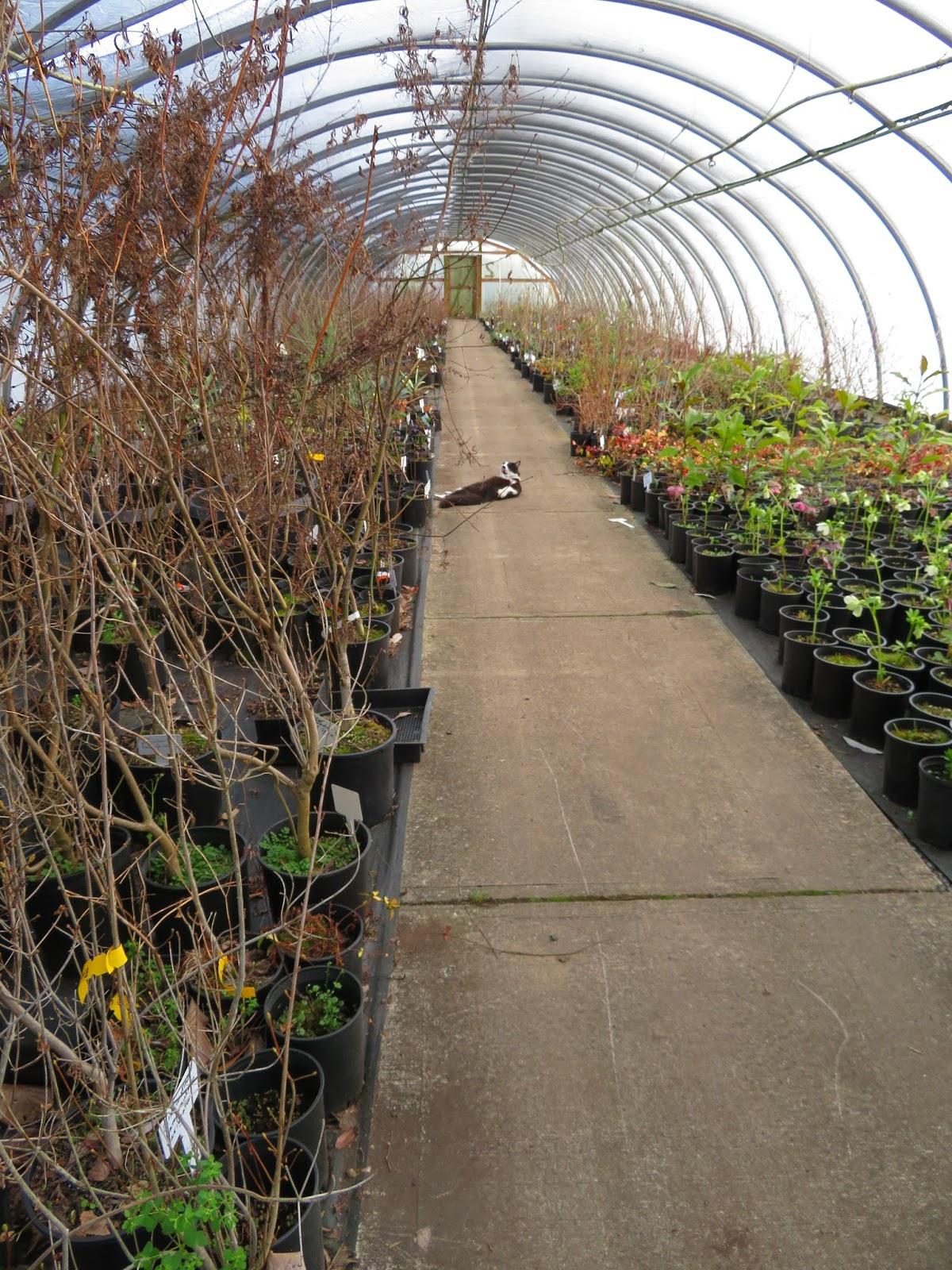 Nursery Visit: Gossler Farm Nursery Part II