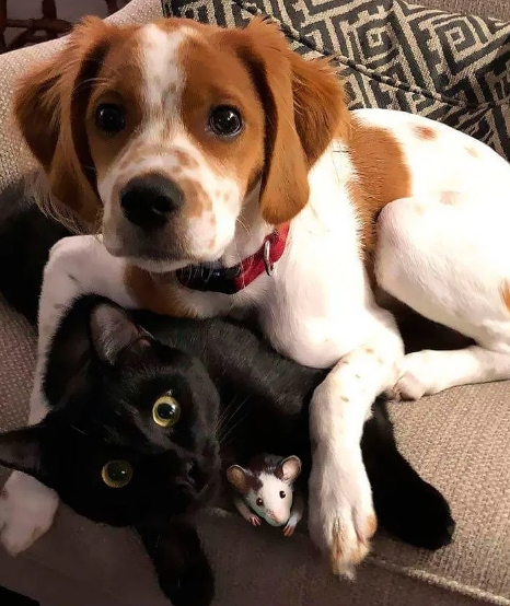 Cats, Cats Breeds, Cats Funny,