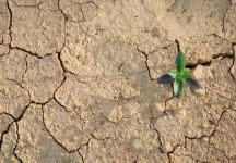 Pengaruh Iklim Terhadap Tanah