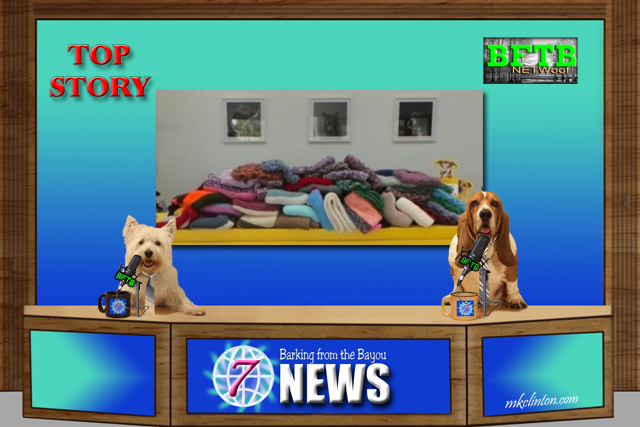 two dogs hosting newscast