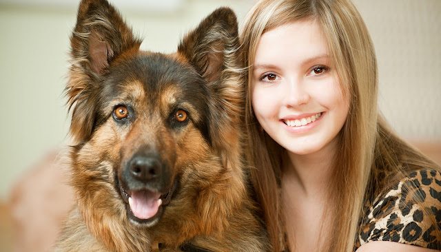 5 Different Types Of German Shepherd Breeds & Their Features