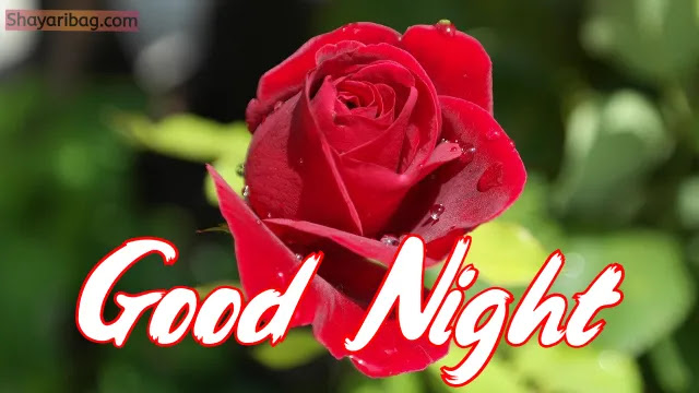 Good Night Flowers Red Rose