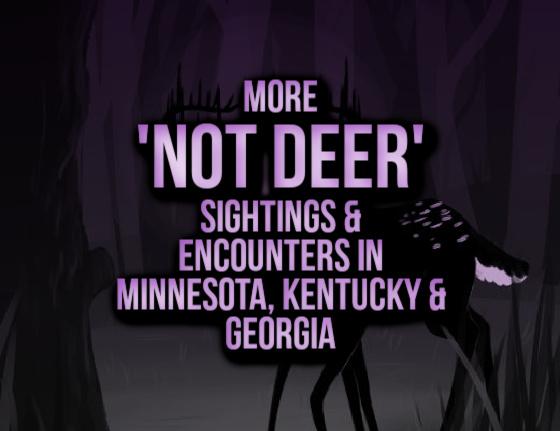 More 'Not Deer' Sightings & Encounters in Minnesota, Kentucky & Georgia
