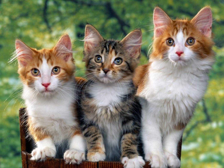Hewan Peliharaan2016 Gambar Binatang Satwa Images