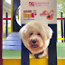 First indoor Pet Park opens at Robinsons Bacolod
