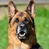 Hombre mata al perro de su ex pareja y deja sus restos en la nevera