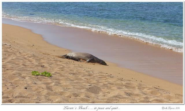 Larsen's Beach: ... in peace and quiet...