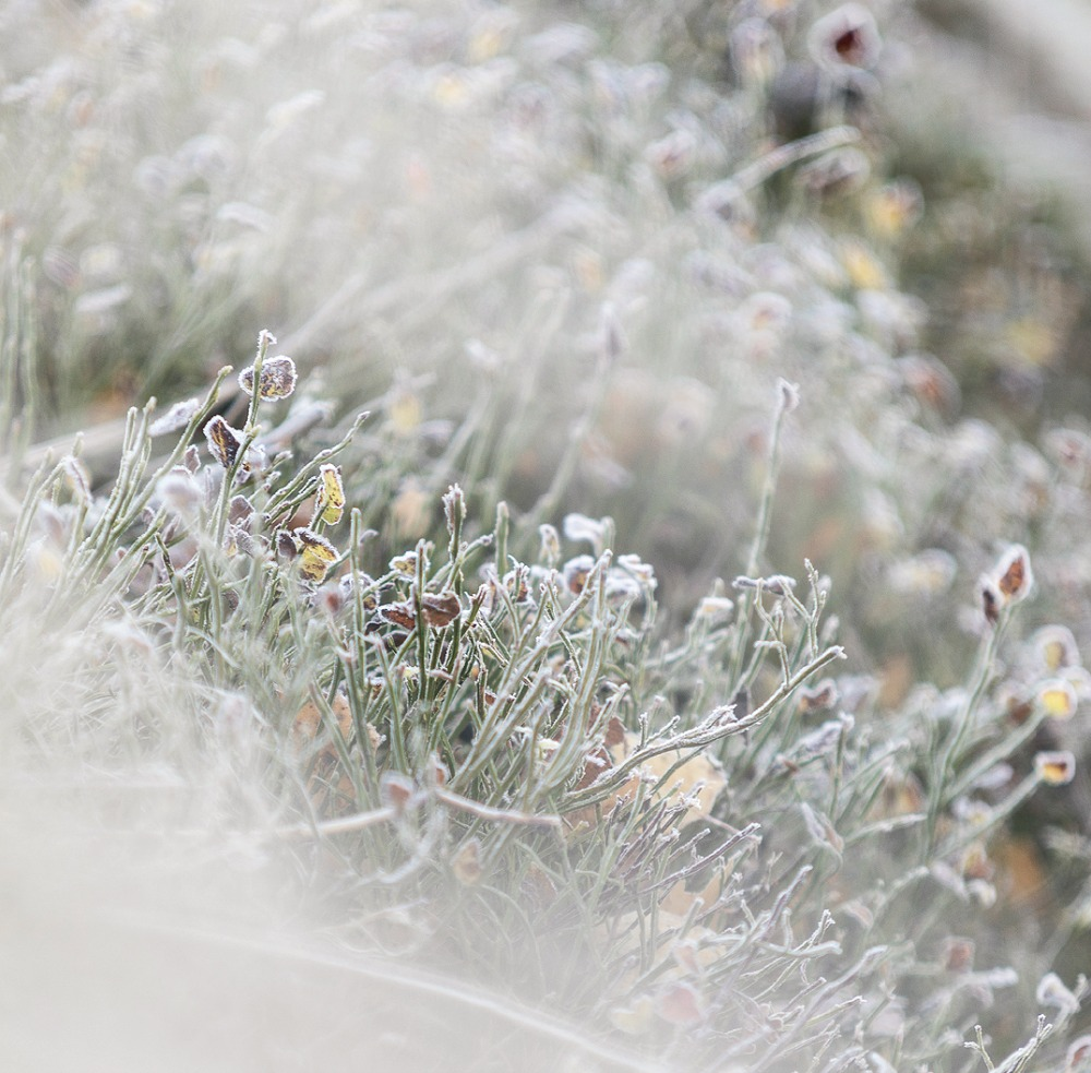 luonto, nature, outdoorphotography, suomi, finland, winter, fall, frost, Visualaddict, Frida Steiner, valokuvaaja, Kirkkonummi, maisema, kuura, huurre