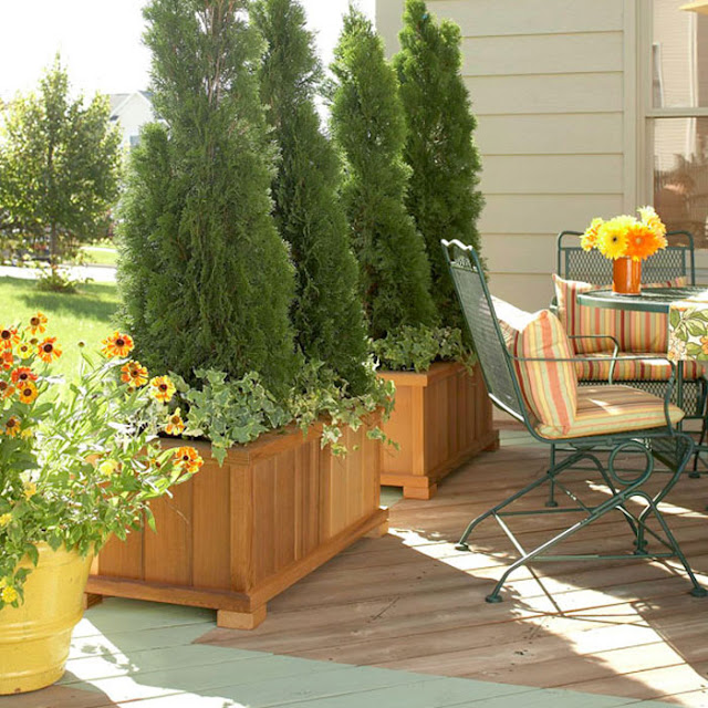Add Privacy to Your Garden or Yard with Plants | Do it ...