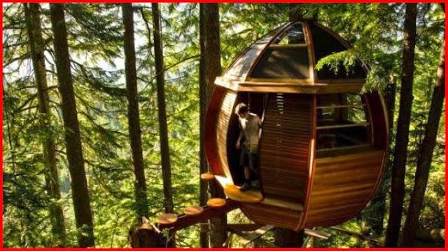 Rumah-pohon-di-gunung-whistler