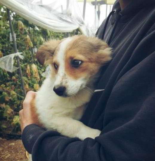 cachorra talla pequeña
