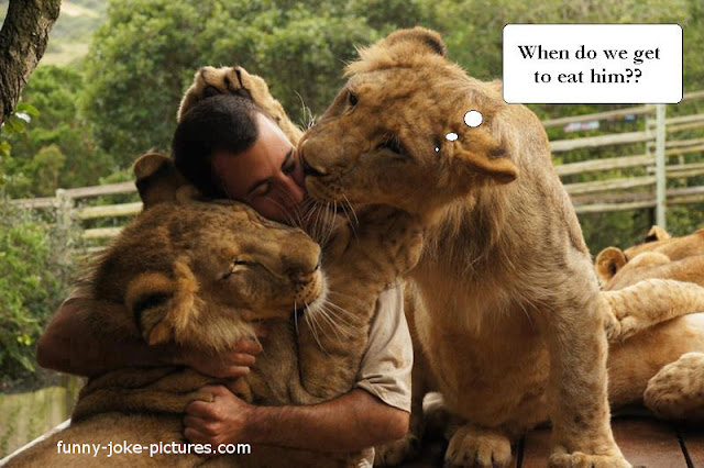 Funny Lion Joke Picture Photo
