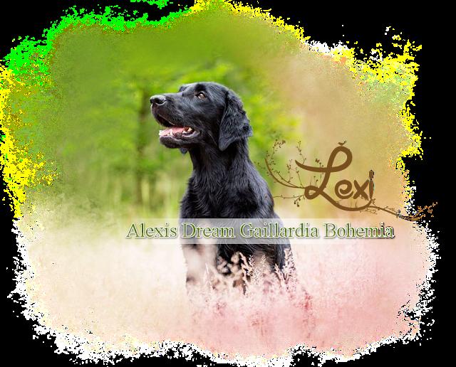 http://www.gaillardiabohemia.cz/p/lexi.html