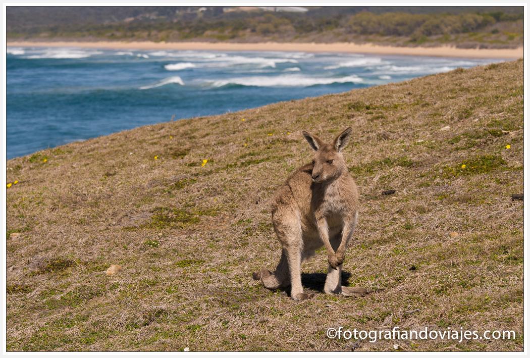 Canguros en Moone Emerald beach