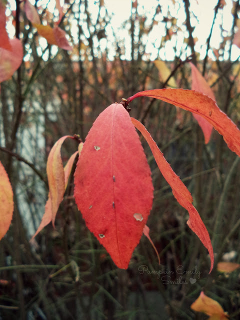 Leaves on a burning bush