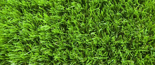 Grass (Credit: oilprice.com) Click to Enlarge.