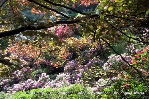 Nella Conca dei Rododendri lungo la Panoramica Zegna - entrambe nate grazie  alla lungimiranza e alla creatività del Conte Ermenegildo (1892-1966) - è  forte ... 8a0bb489997