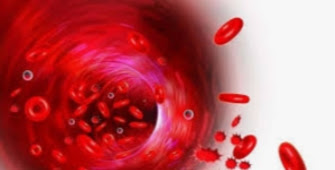 What Is Plasma Therapy? Complete Information