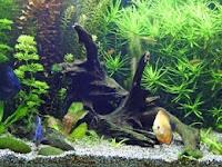 Tips Penting Cara Memelihara Ikan Hias di Akuarium Agar Tetap Indah