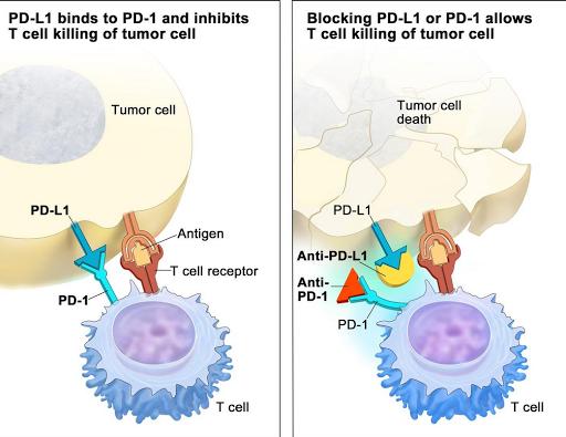 هل تعرف ما هي مثبطات نقاط التفتيش المناعية  Immune Checkpoint Inhibitors