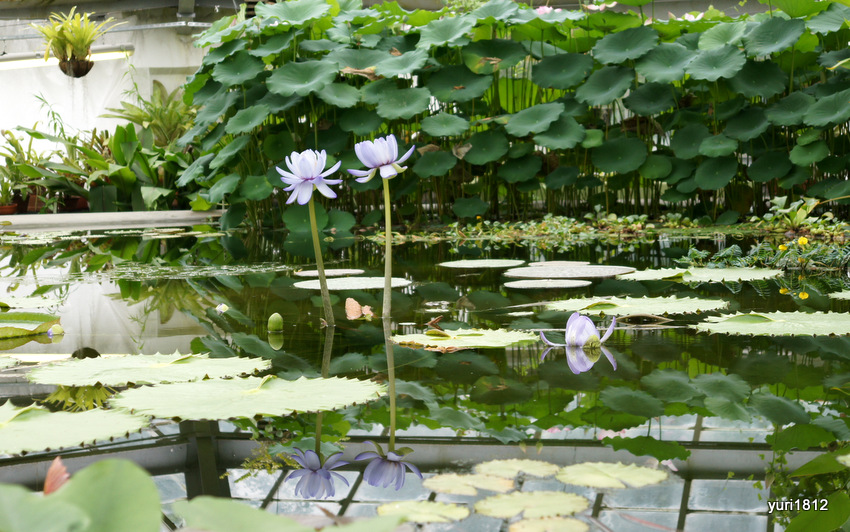 Водная оранжерея Санкт-Петербургского Ботанического сада