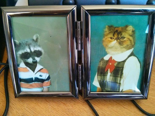Funny Animal Raccoon Cat Family Portrait Joke Picture