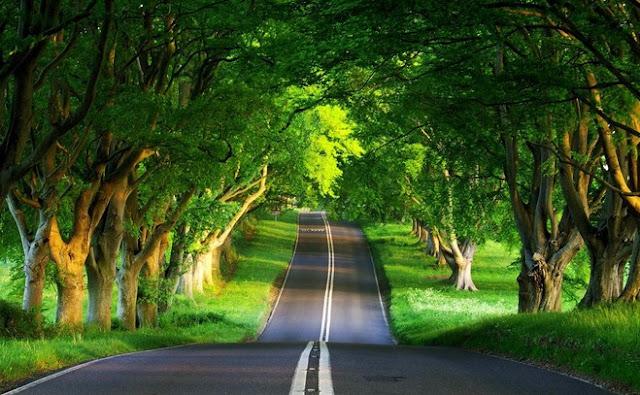 Usaha untuk Menjaga Kelestarian Alam