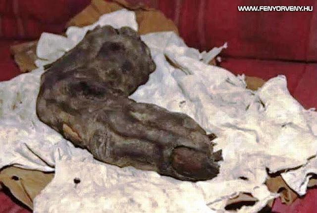 Óriás ujjat találtak Egyiptomban