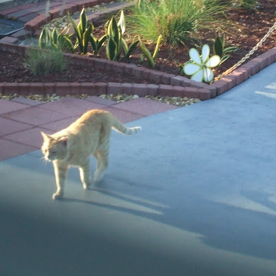 social media interrupted the life of this orange tabby