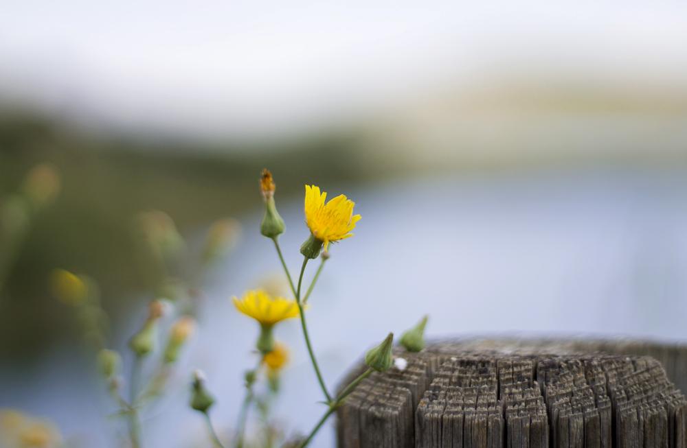 lejos ciudad zaragoza tranquera nuévalos flores