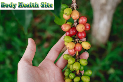 Before Consumption, First Check the Risk of Drinking Green Coffee