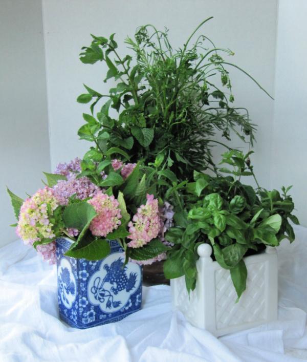Herbs Flowers