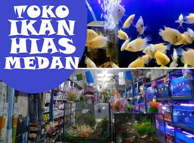 toko ikan hias murah di Medan Sumatera Utara