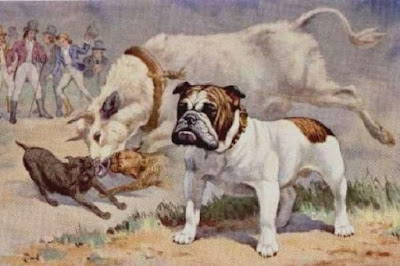 Origen perro Bulldog