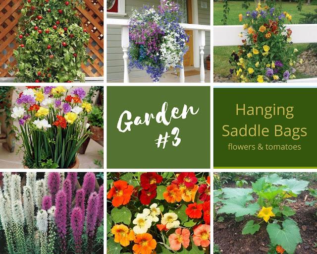 Rock-n-Zen Garden Plot #3 plants identification.