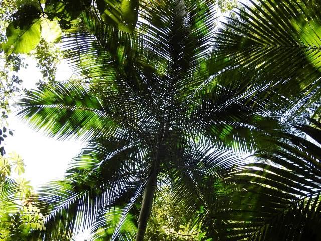 Legado das Águas inicia projeto de conservação da Palmeira Juçara