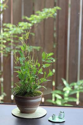 黒軸カリヤスの葉が美しいハケメ模様の鉢に入った山野草盆栽とカエルの置物