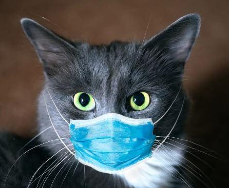 هل يمكن للقطط الضالة نشر الفيروس التاجي
