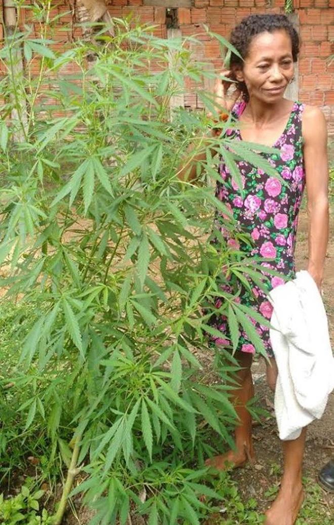 Ao ser presa por plantar maconha, mulher diz que achava que era coentro